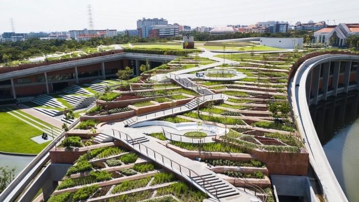 綠色屋頂的農場,種植有機的耐旱水稻、蔬菜等作物。圖片來源:LANDPROCESS粉絲專頁