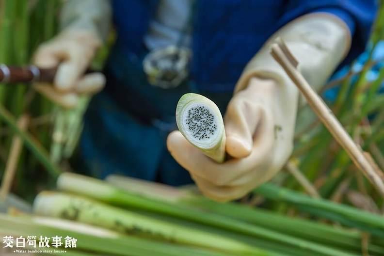 菰黑穗菌太多會造成口感沙沙的。