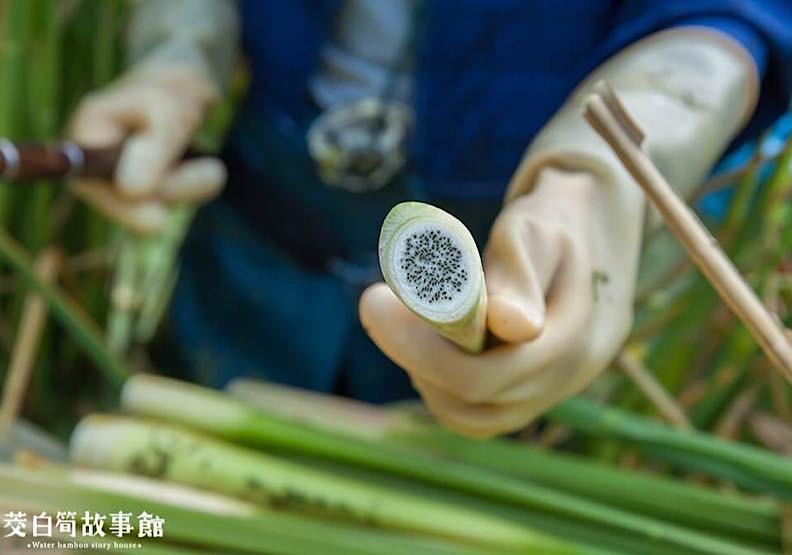 茭白筍有黑點是好還是壞?黑點可以預防骨質疏鬆嗎?
