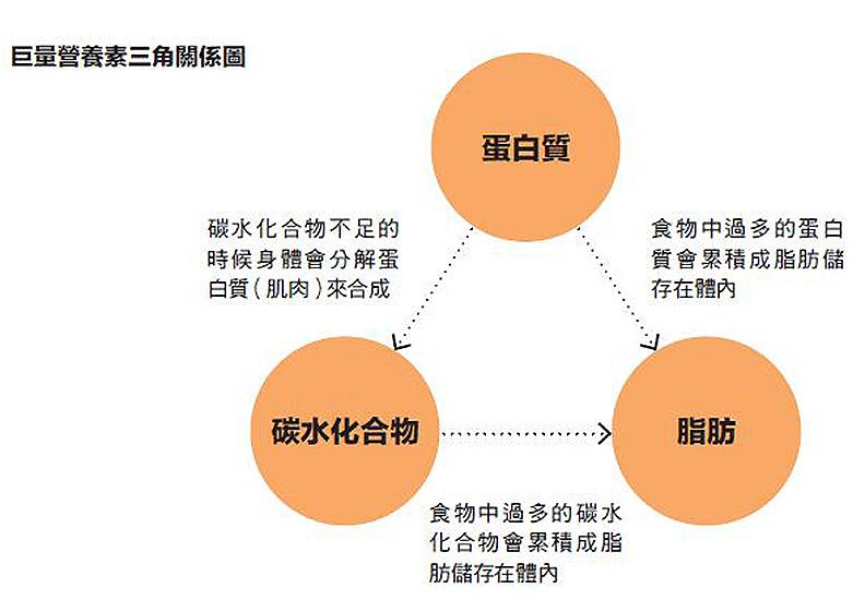 巨量營養素三角關係圖。