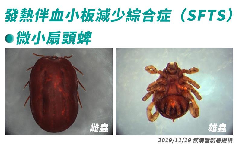SFTS屬於蜱媒病毒感染。