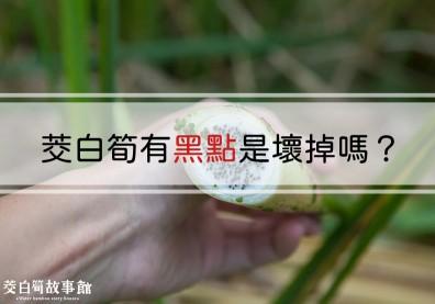 茭白筍黑黑的還能吃嗎?菰黑穗菌與茭白筍黑點的祕密關係