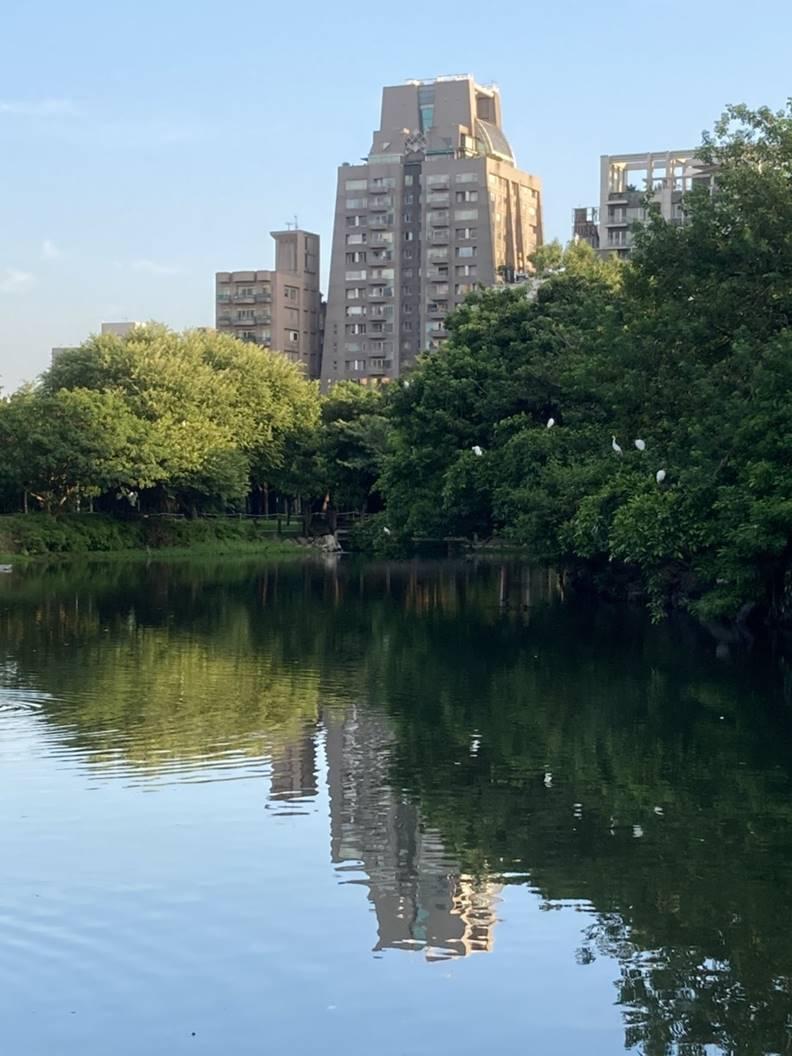 大安森林公園不僅提供市民休閒,還兼負環境生態維護,因為有一個很棒的生態池。陳美伶攝影
