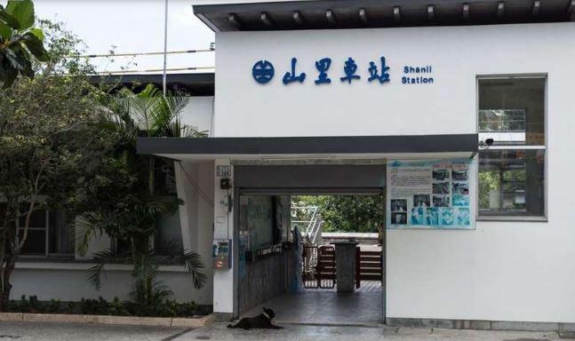 山里火車站建設於2013年,站長和好多貓咪小狗當鐵道員迎接居民回家。(圖片翻攝/台東觀光旅遊網)