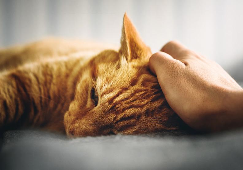 可愛貓咪守護著阿茲海默症爸爸!牠應該知道爸爸比以前更需要陪伴