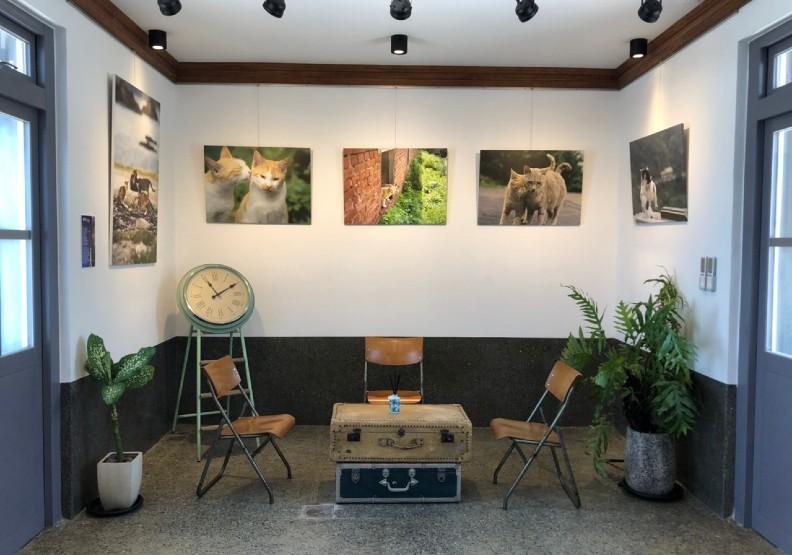 店內結合「貓夫人」攝影展,展示在當地馬崗社區拍攝的貓咪倩影。觀光局東北角管理處提供