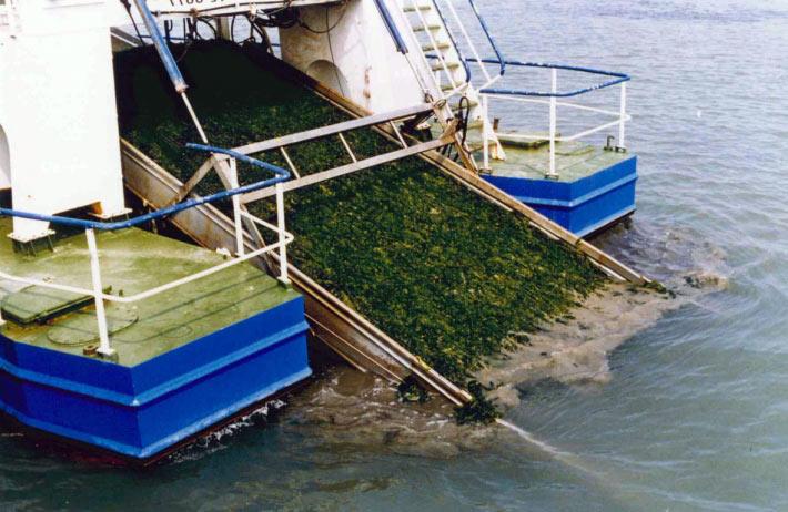 海藻過度增生,危害威尼斯運河生態系。圖片取自Pablo Dorigo官網