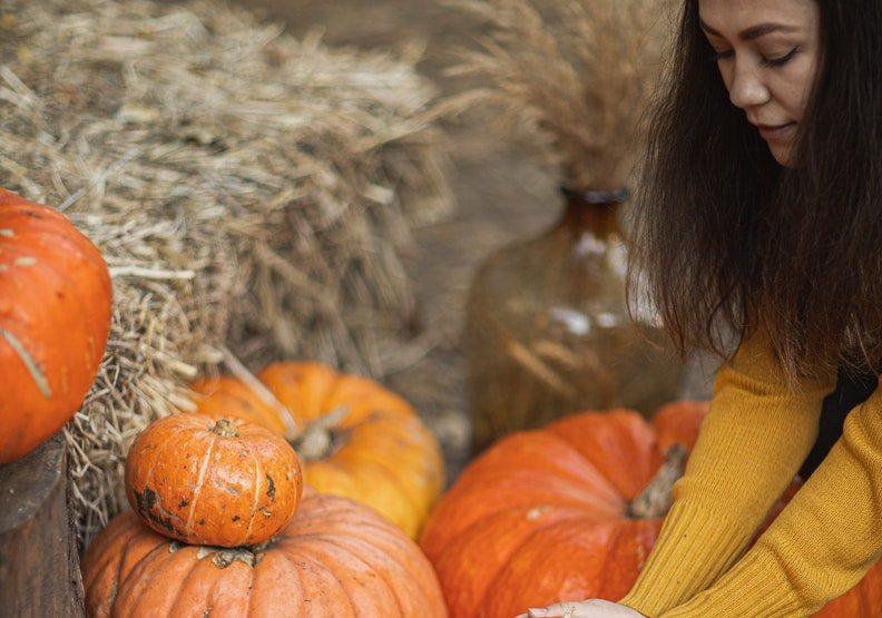 農場學著摘南瓜,也是美國學生萬聖節活動的一部分。情境配圖,圖片來自Pexels
