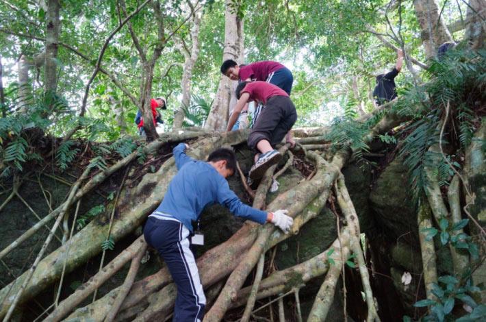 隱身山林間的鸞山森林文化博物館。來源:鸞山森林文化博物館