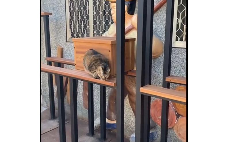為喵而生的貓跳台。