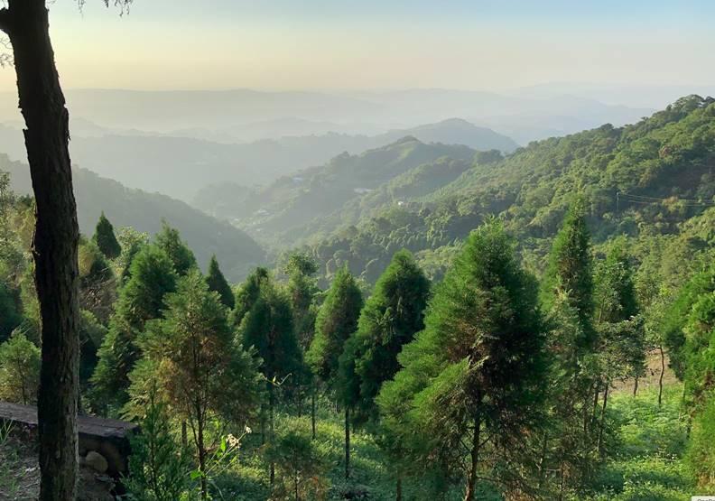 賴桑的種樹堅持,創造出無人可取代的唯一。圖片歐萊德提供