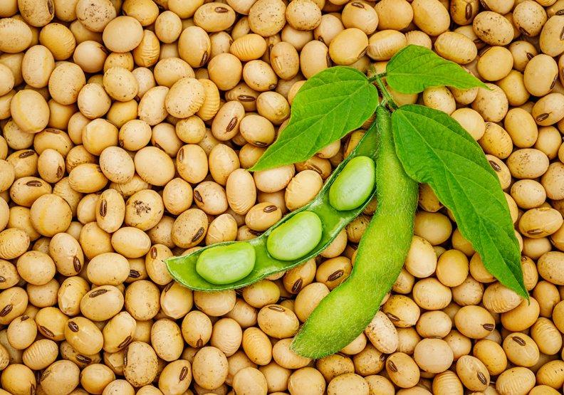 你吃的黃豆來自哪?不二製油,日本推動良心黃豆的先驅