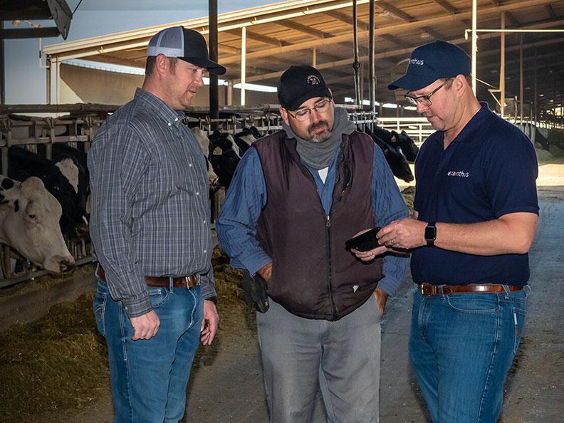 愛爾蘭新創公司Cainthus所開發的乳牛臉部辨識系統,可以透過電子系統,即時通報個別牛隻狀況給農民。圖片取自Cainthus官網
