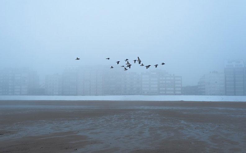 鳥群。圖片來源:Anunturi gratuite@Pexels(CC0
