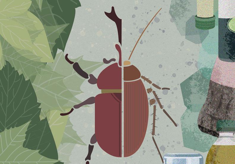 蟑螂、蜘蛛、蚊子等等......可不可以消失在都市裡?