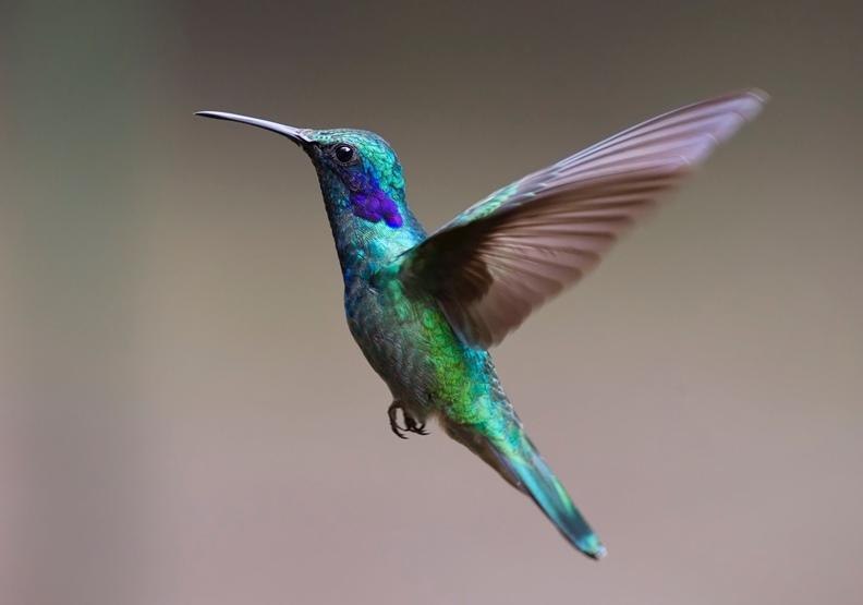 中文的「習」原義是小鳥頻頻拍動翅膀,意圖凌空、飛翔。來自pexels