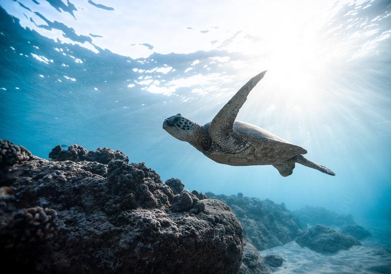 海龜是海中美麗的存在,人類實在不該製造塑膠吸管傷害牠。圖片來自pexels