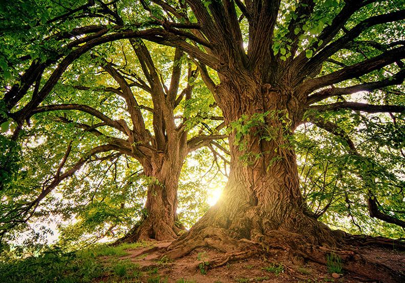 你有耐心栽培長期獲利的森林嗎?圖片來自Pexels