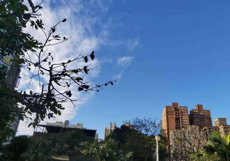 好友C在台北淡水拍攝的枝葉與白雲。作者提供