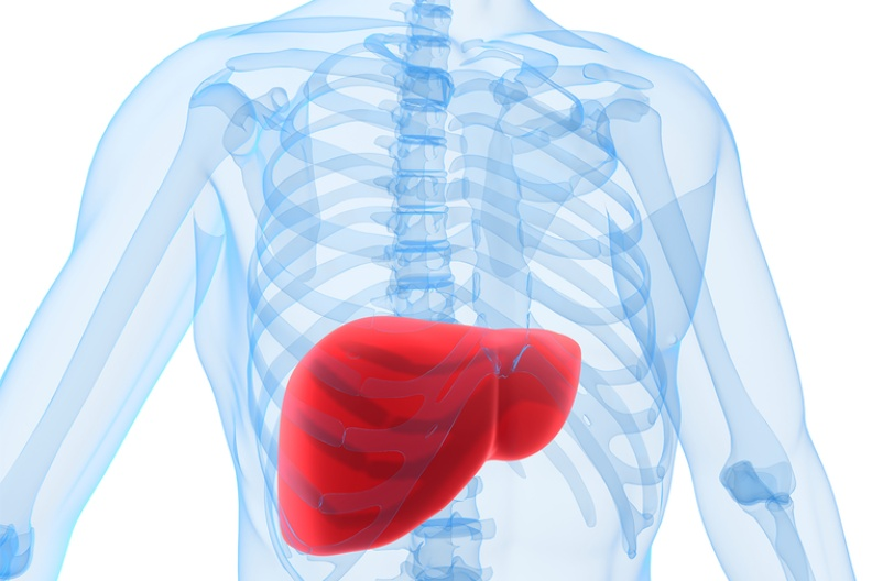肝是人體化學工廠,有解毒、製造酵素之用。圖/ingimage
