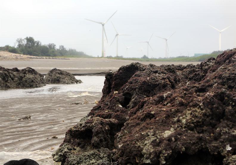 環團發起的「搶救藻礁」公投成案,是台灣史上首樁生態保育的公投。遠見陳之俊攝影