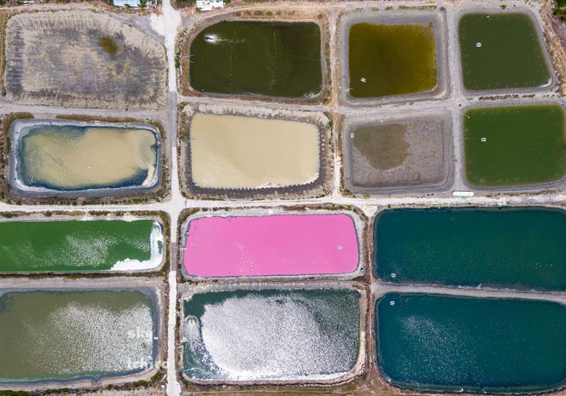 空拍照驚見「調色盤」散落地面!夢幻粉色魚塭怎麼來的?