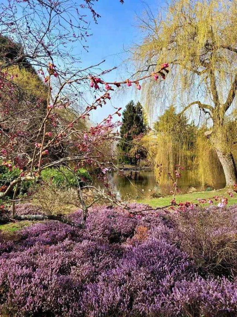 仿照法國莫内花園的蜜若露公園。照片由作者提供