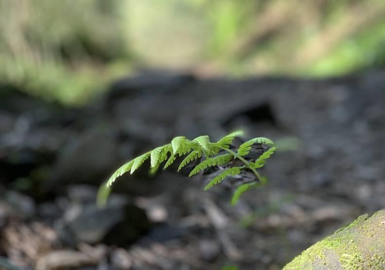 市售產品只加了1%的植物萃取,就可以宣稱是「天然」嗎?圖片由歐萊德蔡怡穎提供