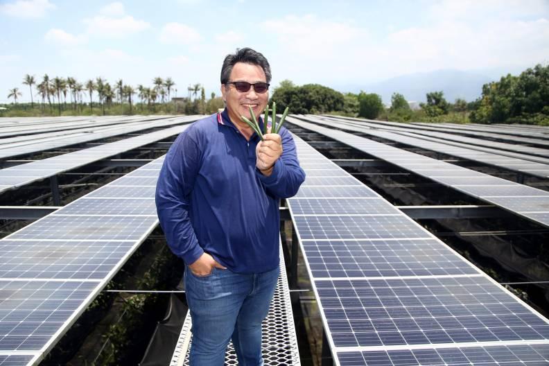 攀上香草田裡的太陽能屋頂,林桐榮手握的香草莢,是他辛苦覓得的台灣「農電共生」出路。陳之俊攝