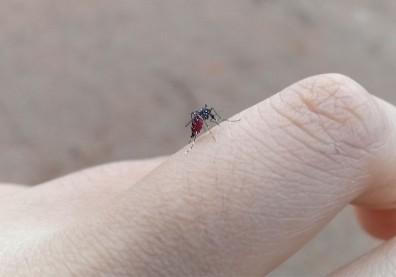 男生還是女生容易被叮?這8種人是蚊子最愛,居家防蚊靠5妙招
