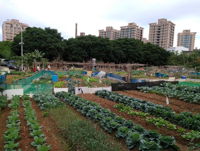 蔬菜園裡仍可見紅土礫石,高傳棋提供。