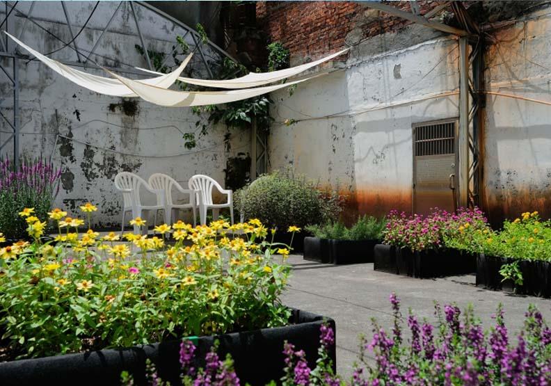賴怡璋邀請正濱里的住戶與店家,於閒置空地上共同種植花卉打造「正濱花田實驗所」,星濱山共創工作室提供。