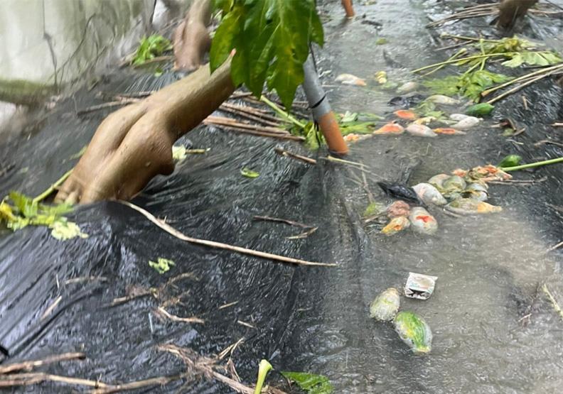 中南部因洪災導致嚴重農損。