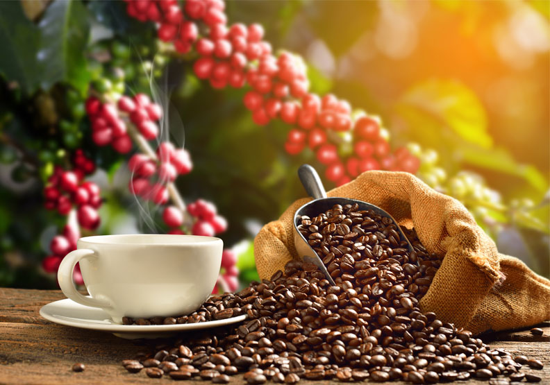日曬、水洗、半水洗、蜜處理,咖啡豆為什麼這麼多種?一文看懂差異