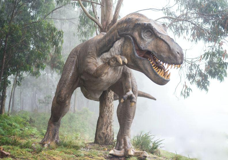 恐龍為什麼會滅絕?圖片來自unsplash by Fausto García-Menéndez