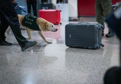 全力圍堵非洲豬瘟!財政部:越南航班進口貨物全面拆袋查驗