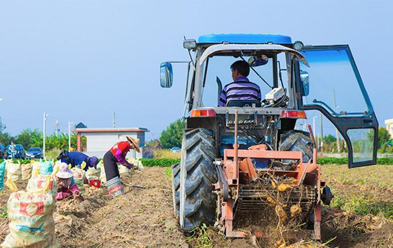 加工業者與在地的農場契作甘藷