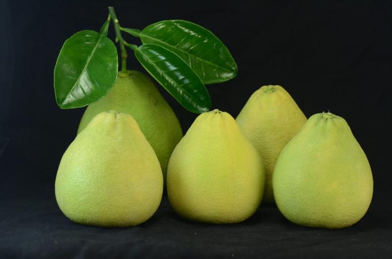 挑選文旦果實油胞細緻、果形底寬上尖呈短三角形者品質最優。行政院農業委員會提供