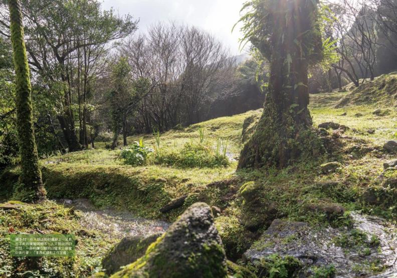 茶葉滿山、茶農遍野?《草山紅》揭150年老照曝陽明山驚人秘密