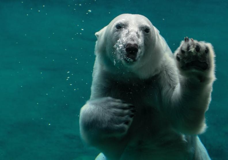 2030年北極冰就全融了?暴雨只是開端...科學家警告第6次大滅絕