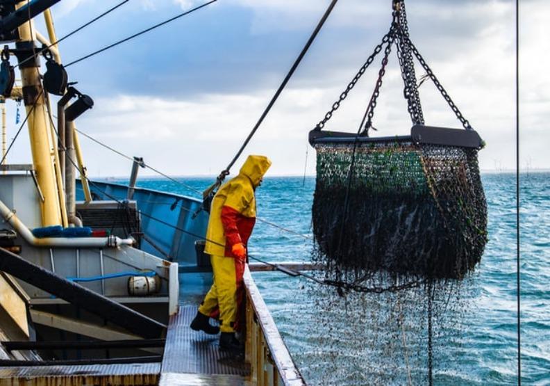 日本盜漁黑金達28億!他拿命訪黑道老大揭「魔性海產」犯罪經濟