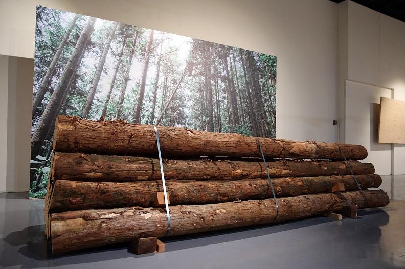 現場亦有台大實驗林管理處所提供的原木,觀展民眾可就近感受木材所帶來的震撼感。
