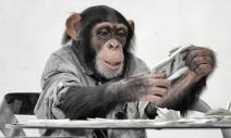 預約金猴投資年,獲利非難事