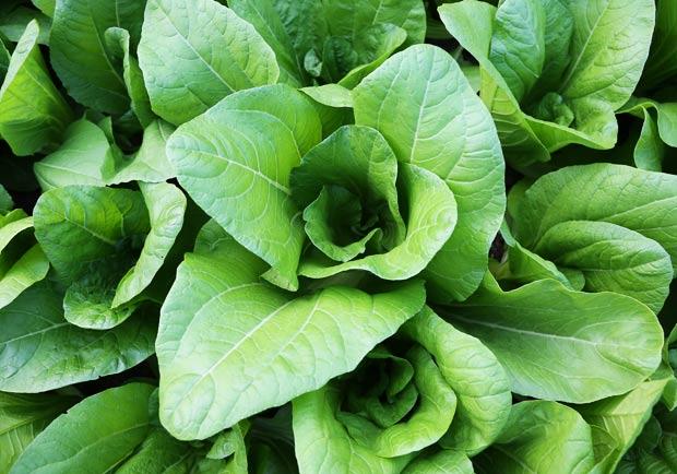 蔬菜應該生吃還是煮熟吃?學問大不同