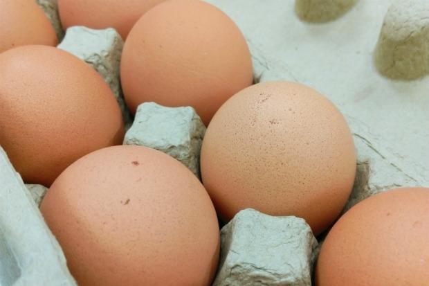 「卵磷脂成分」蛋黃中的好傢伙!正確食用保健康