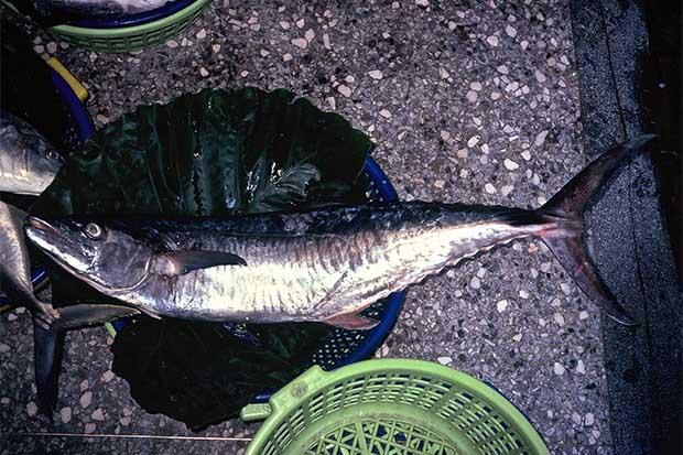 土魠魚的真與假