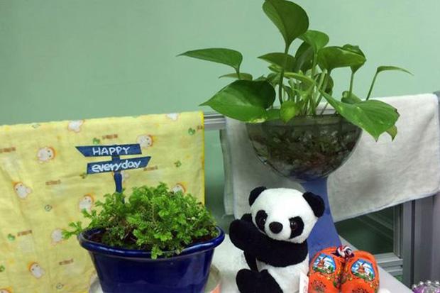 室內多放綠色植物,淨化吸附PM2.5
