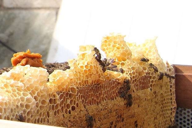用蜜味做一場台灣花季旅行:蜂蜜