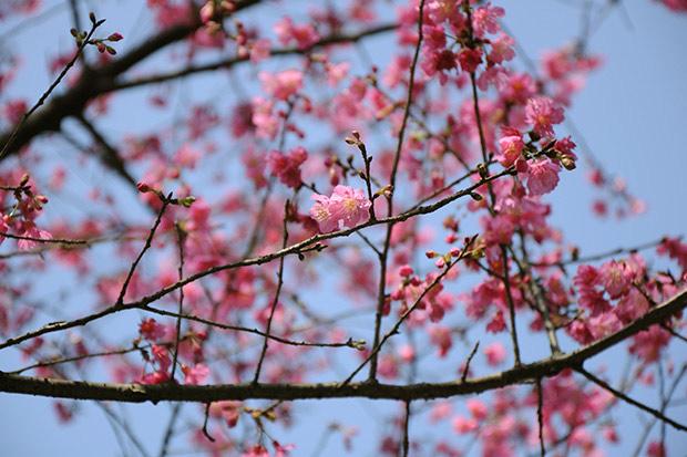 春光正美!過年跟著花去旅行