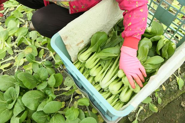 搶當「不」農族,無農藥蔬果不求人!